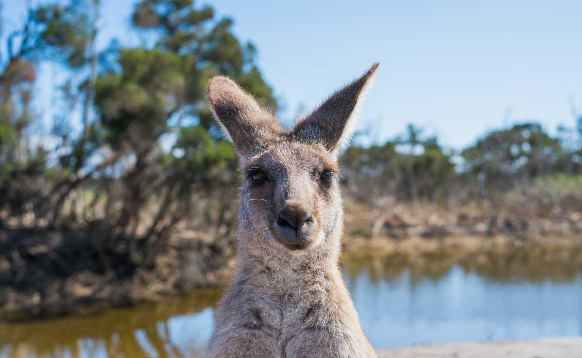 lugares turisticos en australia